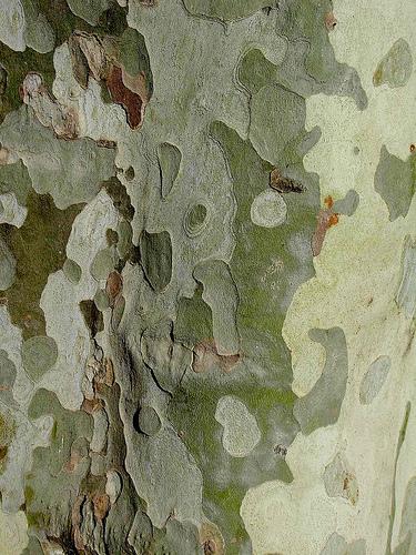 camo tree inspiration for FLIP
